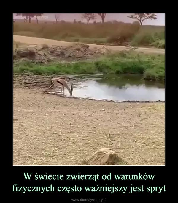 W świecie zwierząt od warunków fizycznych często ważniejszy jest spryt –
