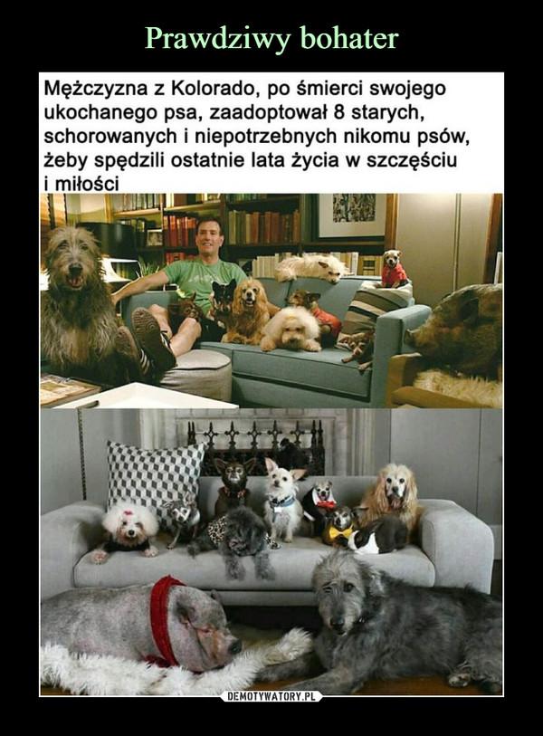 –  Mężczyzna z Kolorado, po śmierci swojegoukochanego psa, zaadoptował 8 starych,schorowanych i niepotrzebnych nikomu psów,żeby spędzili ostatnie lata życia w szczęściui mitości