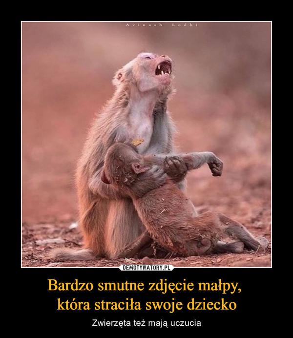Bardzo smutne zdjęcie małpy, która straciła swoje dziecko – Zwierzęta też mają uczucia