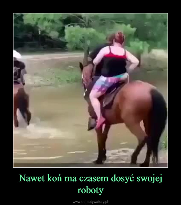Nawet koń ma czasem dosyć swojej roboty –