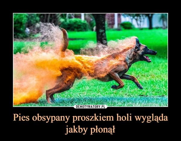 Pies obsypany proszkiem holi wygląda jakby płonął –