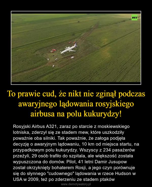 """To prawie cud, że nikt nie zginął podczas  awaryjnego lądowania rosyjskiego airbusa na polu kukurydzy! – Rosyjski Airbus A321, zaraz po starcie z moskiewskiego lotniska, zderzył się ze stadem mew, które uszkodziły poważnie oba silniki. Tak poważnie, że załoga podjęła decyzję o awaryjnym lądowaniu, 10 km od miejsca startu, na przypadkowym polu kukurydzy. Wszyscy z 234 pasażerów przeżyli, 29 osób trafiło do szpitala, ale większość została wypuszczona do domów. Pilot, 41 letni Damir Jusupow został okrzyknięty bohaterem Rosji, a jego czyn porównuje się do słynnego """"cudownego"""" lądowania w rzece Hudson w USA w 2009, też po zderzeniu ze stadem ptaków"""