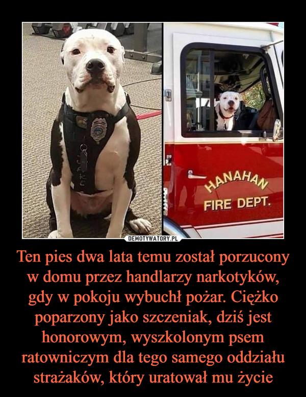Ten pies dwa lata temu został porzucony w domu przez handlarzy narkotyków, gdy w pokoju wybuchł pożar. Ciężko poparzony jako szczeniak, dziś jest honorowym, wyszkolonym psem ratowniczym dla tego samego oddziału strażaków, który uratował mu życie –