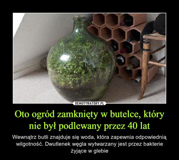 Oto ogród zamknięty w butelce, który nie był podlewany przez 40 lat – Wewnątrz butli znajduje się woda, która zapewnia odpowiednią wilgotność. Dwutlenek węgla wytwarzany jest przez bakterie żyjące w glebie