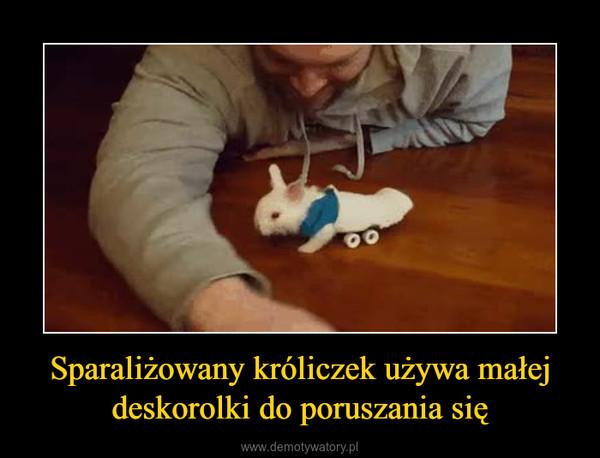 Sparaliżowany króliczek używa małej deskorolki do poruszania się –