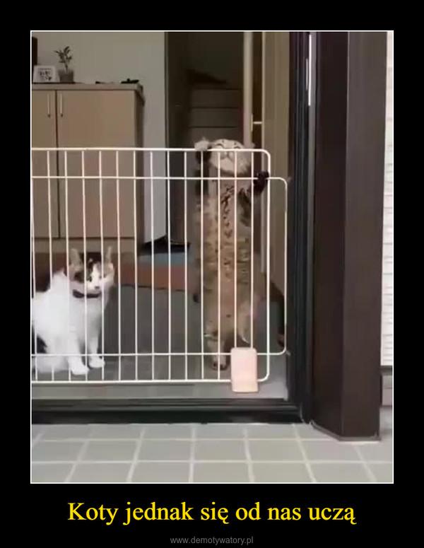 Koty jednak się od nas uczą –