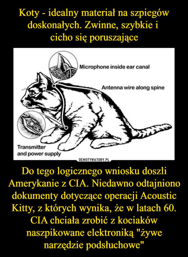 """Do tego logicznego wniosku doszli Amerykanie z CIA. Niedawno odtajniono dokumenty dotyczące operacji Acoustic Kitty, z których wynika, że w latach 60. CIA chciała zrobić z kociaków naszpikowane elektroniką """"żywe narzędzie podsłuchowe"""" –"""