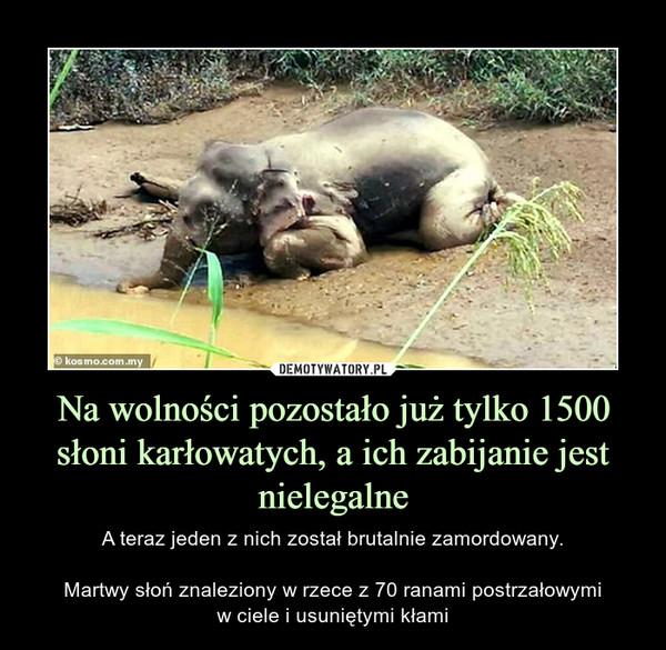 Na wolności pozostało już tylko 1500 słoni karłowatych, a ich zabijanie jest nielegalne – A teraz jeden z nich został brutalnie zamordowany.Martwy słoń znaleziony w rzece z 70 ranami postrzałowymiw ciele i usuniętymi kłami