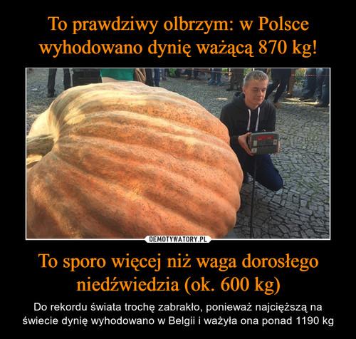 To prawdziwy olbrzym: w Polsce wyhodowano dynię ważącą 870 kg! To sporo więcej niż waga dorosłego niedźwiedzia (ok. 600 kg)