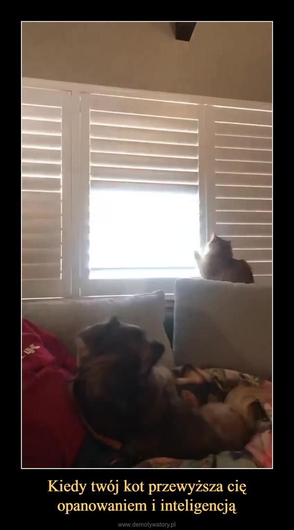 Kiedy twój kot przewyższa cię opanowaniem i inteligencją –