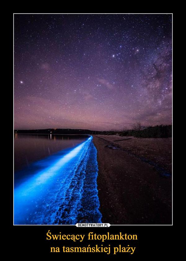 Świecący fitoplankton na tasmańskiej plaży –