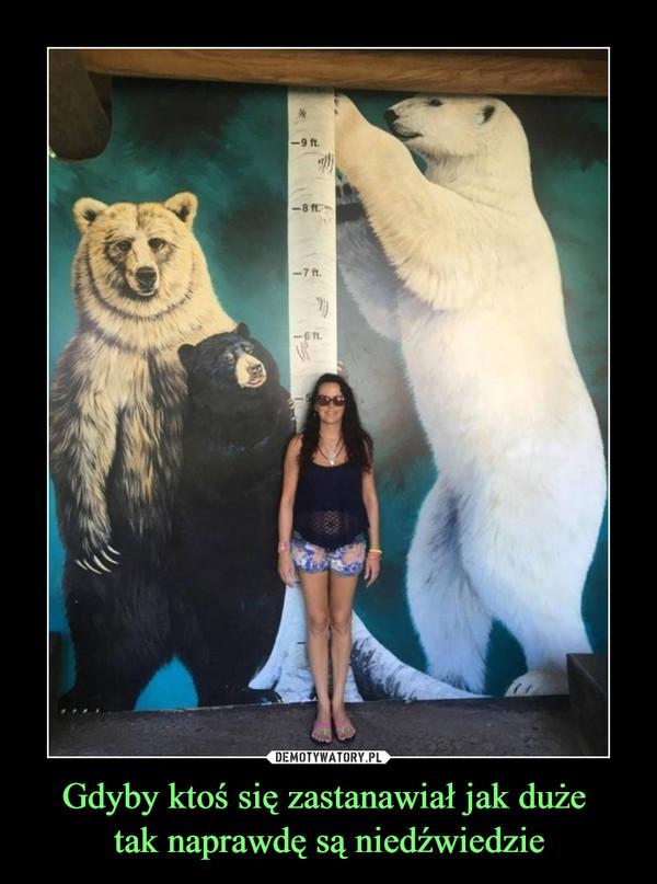 Gdyby ktoś się zastanawiał jak duże tak naprawdę są niedźwiedzie –
