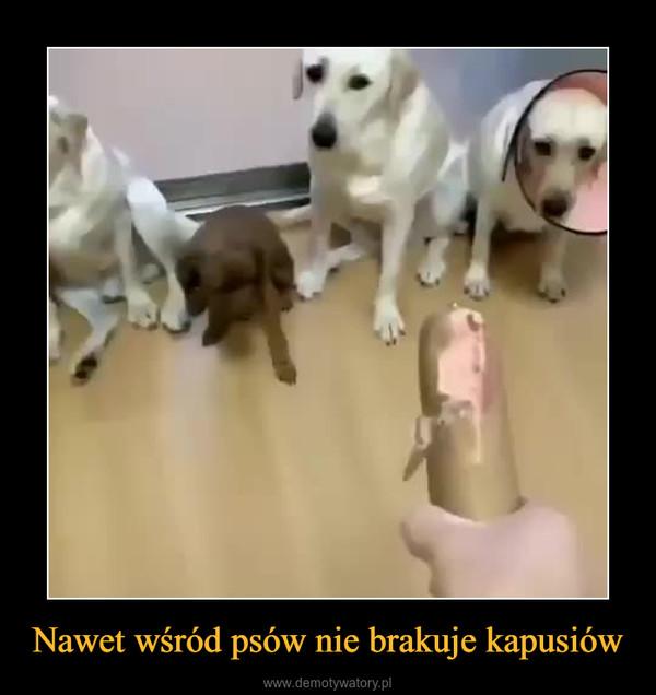 Nawet wśród psów nie brakuje kapusiów –