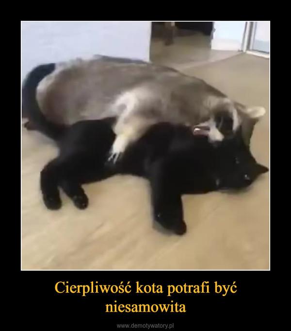Cierpliwość kota potrafi być niesamowita –