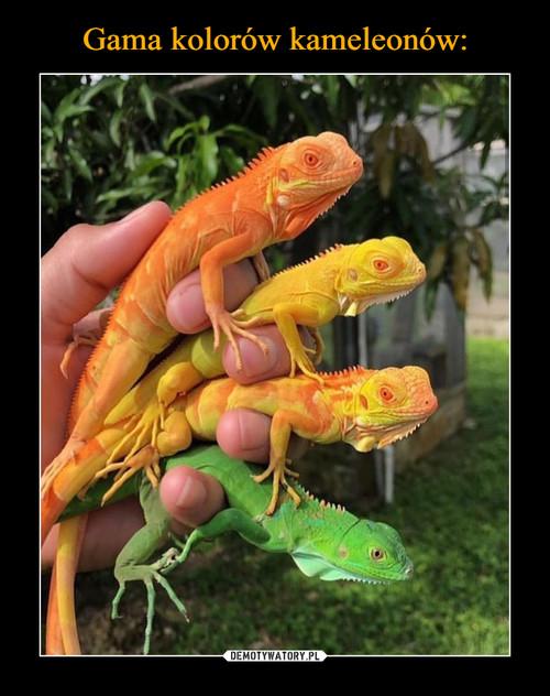 Gama kolorów kameleonów: