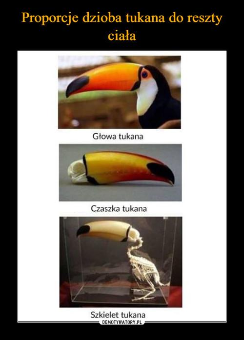 Proporcje dzioba tukana  do reszty ciała