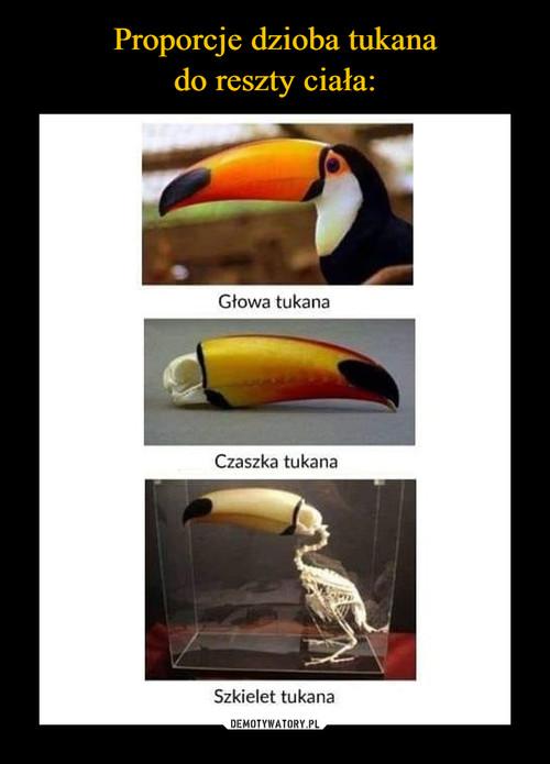 Proporcje dzioba tukana do reszty ciała: