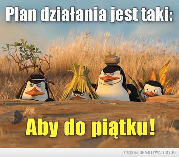 Plan działania –  Plan działania jest taki:Aby do piątku!