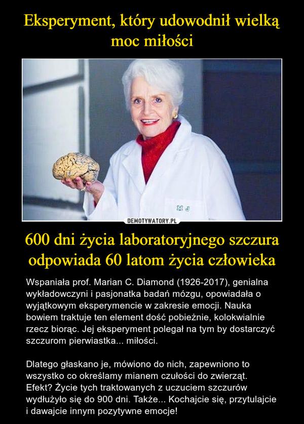 600 dni życia laboratoryjnego szczura odpowiada 60 latom życia człowieka – Wspaniała prof. Marian C. Diamond (1926-2017), genialna wykładowczyni i pasjonatka badań mózgu, opowiadała o wyjątkowym eksperymencie w zakresie emocji. Nauka bowiem traktuje ten element dość pobieżnie, kolokwialnie rzecz biorąc. Jej eksperyment polegał na tym by dostarczyć szczurom pierwiastka... miłości.Dlatego głaskano je, mówiono do nich, zapewniono to wszystko co określamy mianem czułości do zwierząt.  Efekt? Życie tych traktowanych z uczuciem szczurów wydłużyło się do 900 dni. Także... Kochajcie się, przytulajcie i dawajcie innym pozytywne emocje!