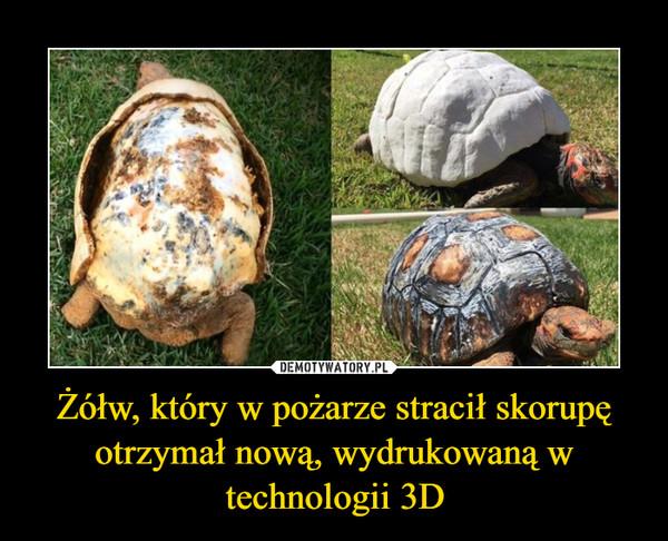 Żółw, który w pożarze stracił skorupę otrzymał nową, wydrukowaną w technologii 3D –