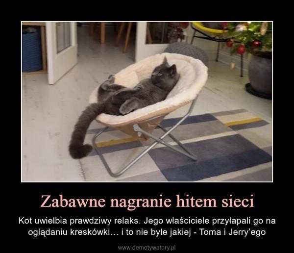 Zabawne nagranie hitem sieci – Kot uwielbia prawdziwy relaks. Jego właściciele przyłapali go na oglądaniu kreskówki… i to nie byle jakiej - Toma i Jerry'ego