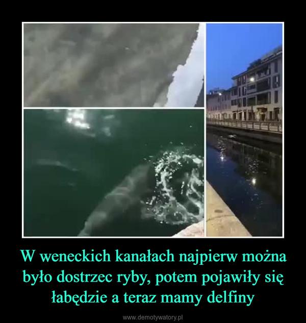 W weneckich kanałach najpierw można było dostrzec ryby, potem pojawiły się łabędzie a teraz mamy delfiny –