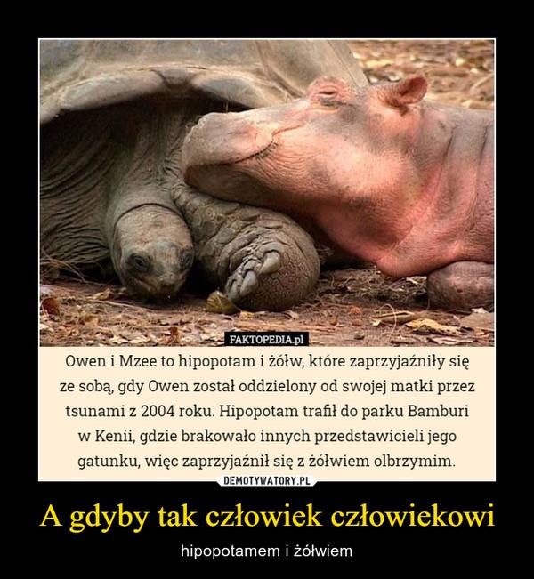 A gdyby tak człowiek człowiekowi – hipopotamem i żółwiem