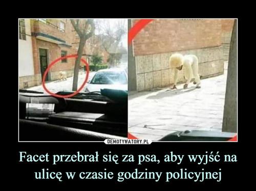 Facet przebrał się za psa, aby wyjść na ulicę w czasie godziny policyjnej