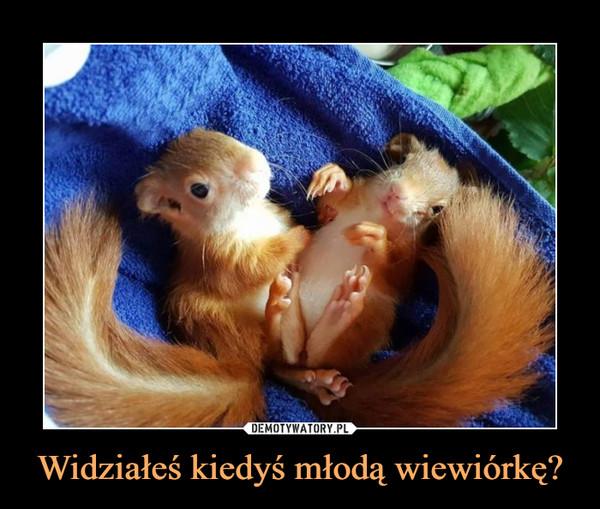 Widziałeś kiedyś młodą wiewiórkę? –