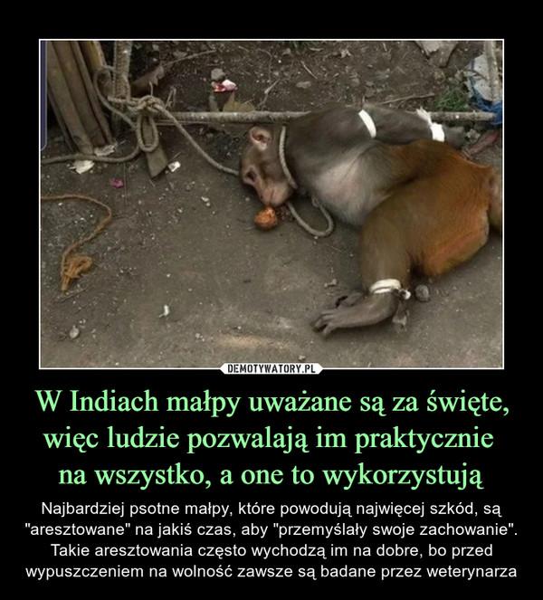 """W Indiach małpy uważane są za święte, więc ludzie pozwalają im praktycznie na wszystko, a one to wykorzystują – Najbardziej psotne małpy, które powodują najwięcej szkód, są """"aresztowane"""" na jakiś czas, aby """"przemyślały swoje zachowanie"""". Takie aresztowania często wychodzą im na dobre, bo przed wypuszczeniem na wolność zawsze są badane przez weterynarza"""