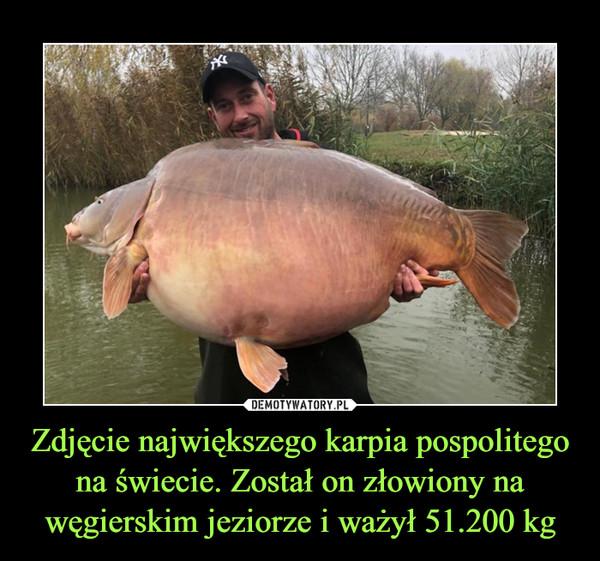 Zdjęcie największego karpia pospolitego na świecie. Został on złowiony na węgierskim jeziorze i ważył 51.200 kg –