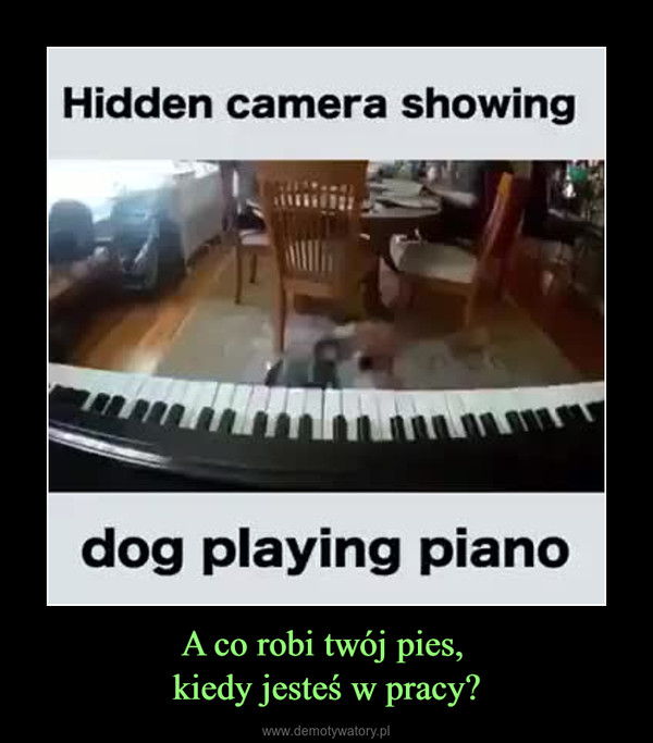 A co robi twój pies, kiedy jesteś w pracy? –