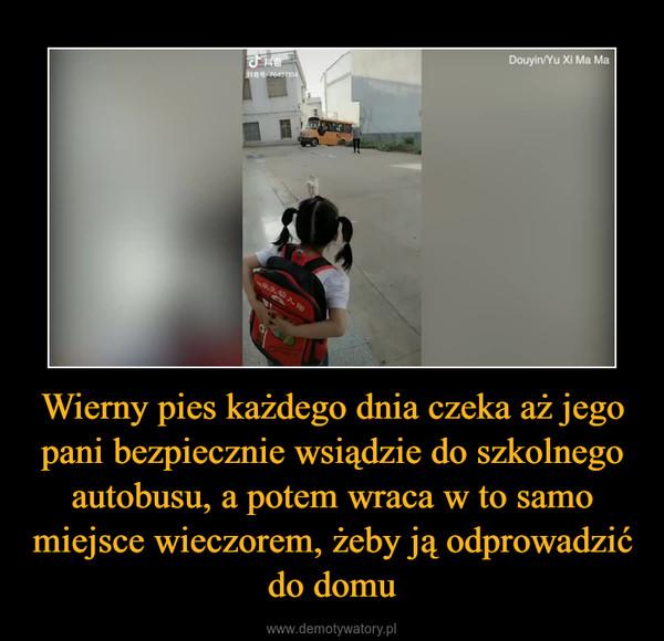 Wierny pies każdego dnia czeka aż jego pani bezpiecznie wsiądzie do szkolnego autobusu, a potem wraca w to samo miejsce wieczorem, żeby ją odprowadzić do domu –