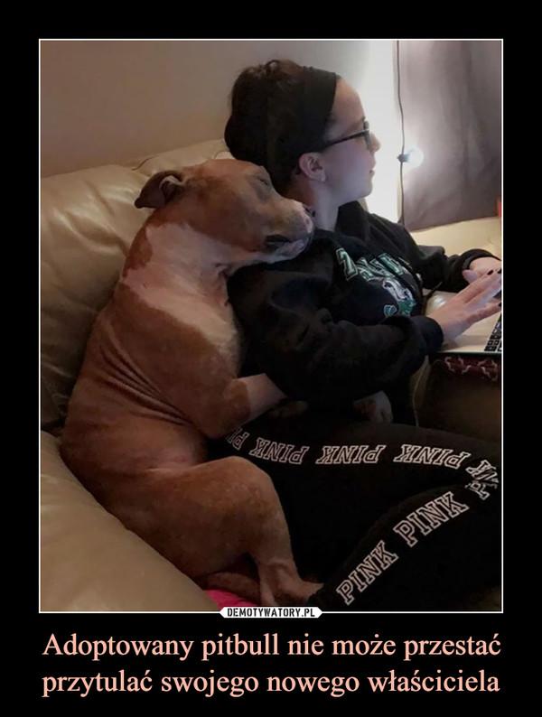 Adoptowany pitbull nie może przestać przytulać swojego nowego właściciela –