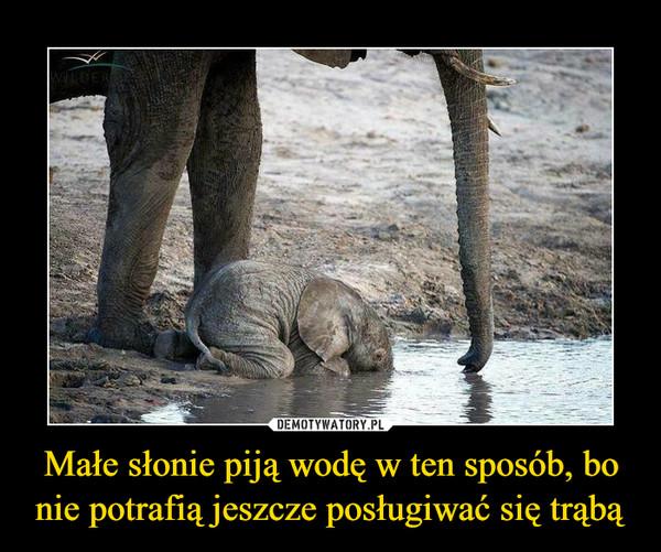 Małe słonie piją wodę w ten sposób, bo nie potrafią jeszcze posługiwać się trąbą –