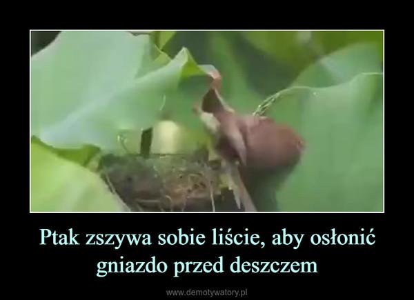 Ptak zszywa sobie liście, aby osłonić gniazdo przed deszczem –