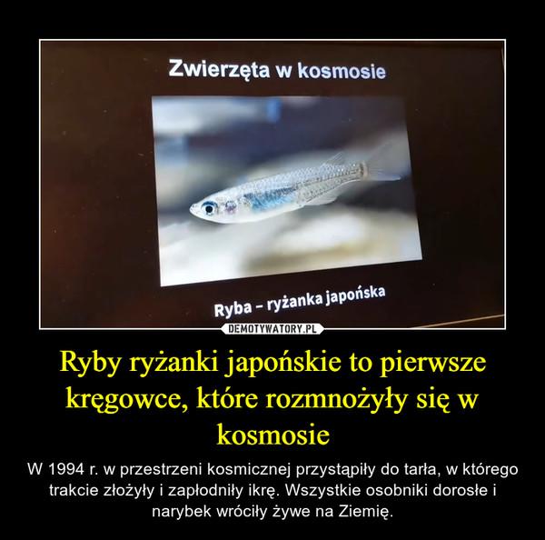 Ryby ryżanki japońskie to pierwsze kręgowce, które rozmnożyły się w kosmosie – W 1994 r. w przestrzeni kosmicznej przystąpiły do tarła, w którego trakcie złożyły i zapłodniły ikrę. Wszystkie osobniki dorosłe i narybek wróciły żywe na Ziemię.