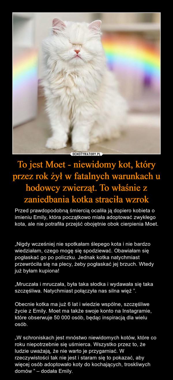 """To jest Moet - niewidomy kot, który przez rok żył w fatalnych warunkach u hodowcy zwierząt. To właśnie z zaniedbania kotka straciła wzrok – Przed prawdopodobną śmiercią ocaliła ją dopiero kobieta o imieniu Emily, która początkowo miała adoptować zwykłego kota, ale nie potrafiła przejść obojętnie obok cierpienia Moet. """"Nigdy wcześniej nie spotkałam ślepego kota i nie bardzo wiedziałam, czego mogę się spodziewać. Obawiałam się pogłaskać go po policzku. Jednak kotka natychmiast przewróciła się na plecy, żeby pogłaskać jej brzuch. Wtedy już byłam kupiona!""""Mruczała i mruczała, była taka słodka i wydawała się taka szczęśliwa. Natychmiast połączyła nas silna więź """".Obecnie kotka ma już 6 lat i wiedzie wspólne, szczęśliwe życie z Emily. Moet ma także swoje konto na Instagramie, które obserwuje 50 000 osób, będąc inspiracją dla wielu osób.""""W schroniskach jest mnóstwo niewidomych kotów, które co roku niepotrzebnie się uśmierca. Wszystko przez to, że ludzie uważają, że nie warto je przygarniać. W rzeczywistości tak nie jest i staram się to pokazać, aby więcej osób adoptowało koty do kochających, troskliwych domów """" – dodała Emily."""