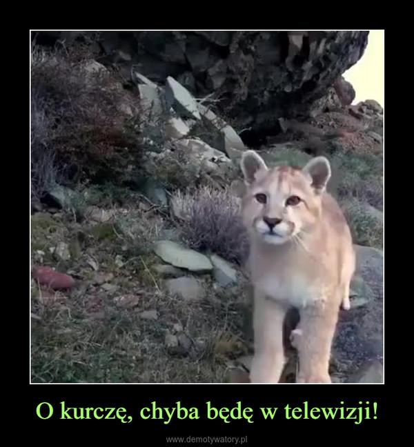 O kurczę, chyba będę w telewizji! –