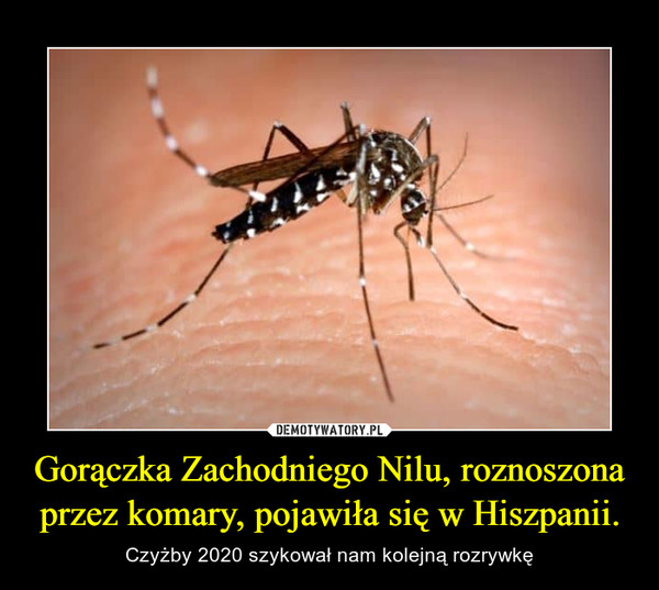 Gorączka Zachodniego Nilu, roznoszona przez komary, pojawiła się w Hiszpanii. – Czyżby 2020 szykował nam kolejną rozrywkę