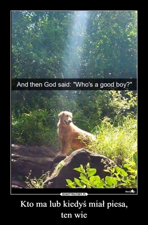 Kto ma lub kiedyś miał piesa, ten wie