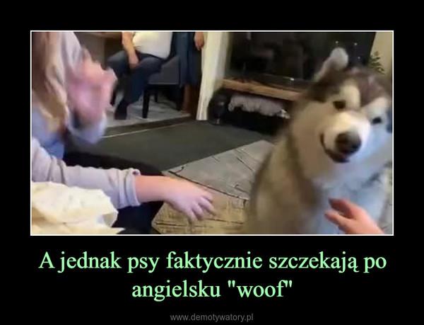 """A jednak psy faktycznie szczekają po angielsku """"woof"""" –"""