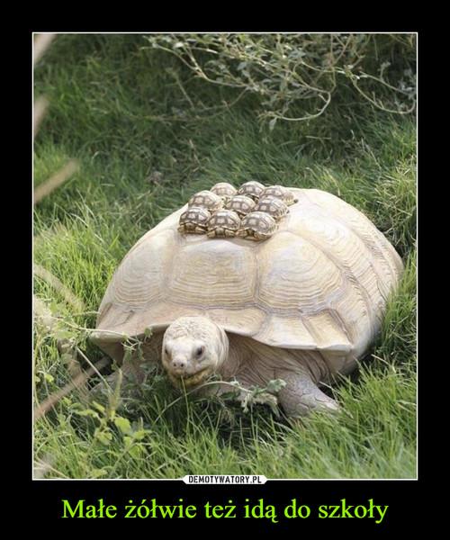 Małe żółwie też idą do szkoły