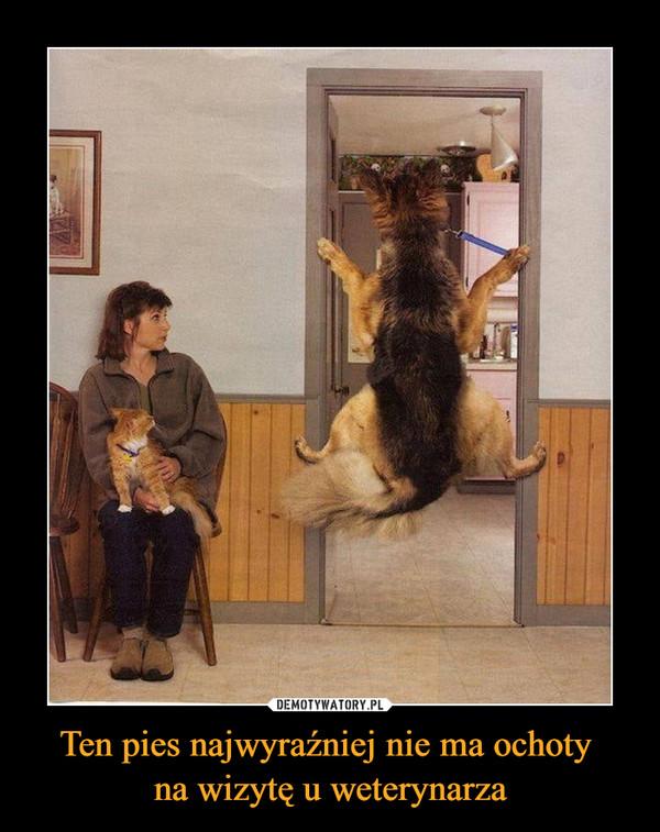 Ten pies najwyraźniej nie ma ochoty na wizytę u weterynarza –