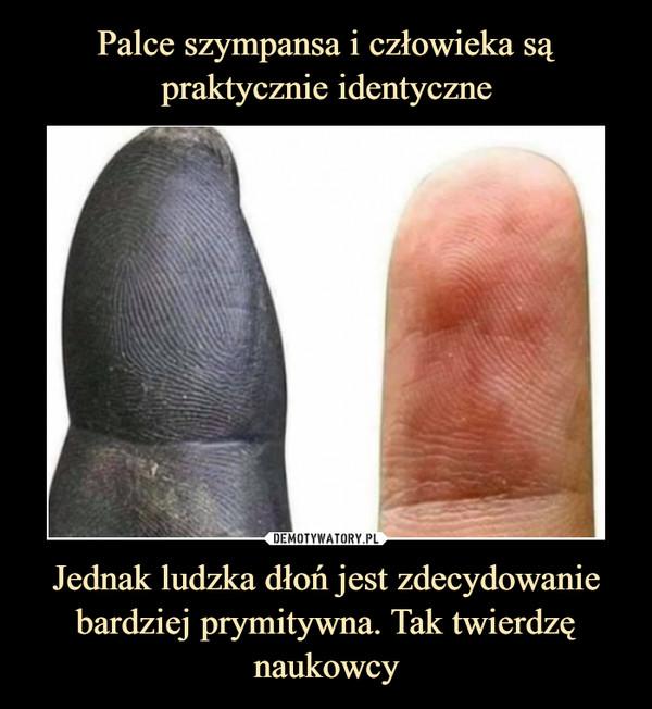 Jednak ludzka dłoń jest zdecydowanie bardziej prymitywna. Tak twierdzę naukowcy –