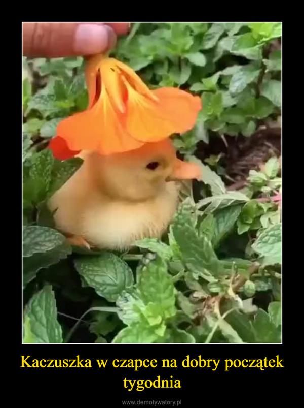 Kaczuszka w czapce na dobry początek tygodnia –