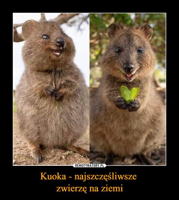 Kuoka - najszczęśliwsze zwierzę na ziemi –