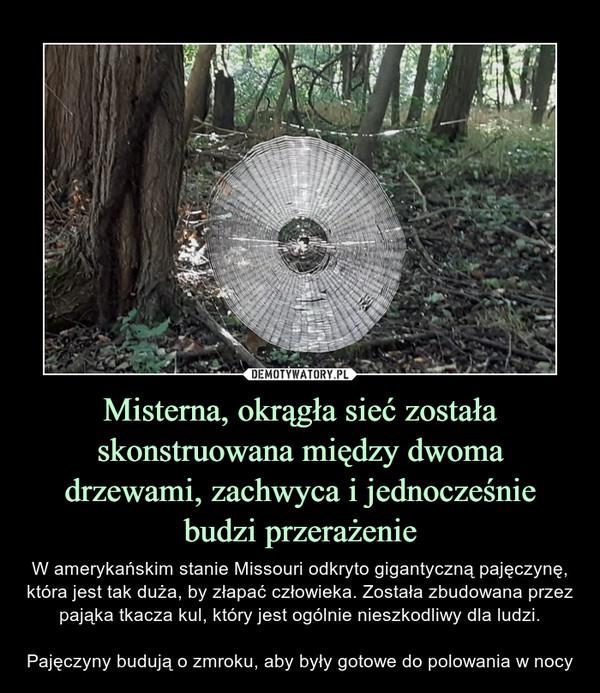 Misterna, okrągła sieć została skonstruowana między dwoma drzewami, zachwyca i jednocześnie budzi przerażenie – W amerykańskim stanie Missouri odkryto gigantyczną pajęczynę, która jest tak duża, by złapać człowieka. Została zbudowana przez pająka tkacza kul, który jest ogólnie nieszkodliwy dla ludzi.Pajęczyny budują o zmroku, aby były gotowe do polowania w nocy