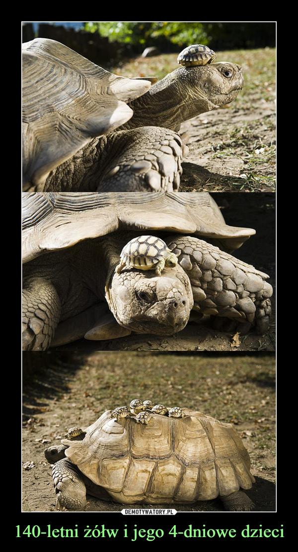 140-letni żółw i jego 4-dniowe dzieci –