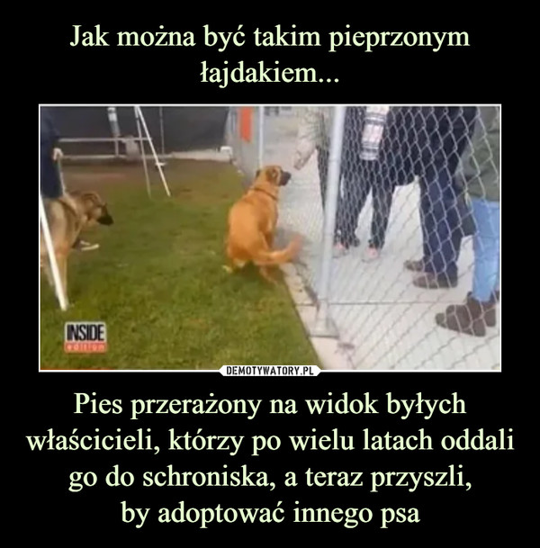 Pies przerażony na widok byłych właścicieli, którzy po wielu latach oddali go do schroniska, a teraz przyszli,by adoptować innego psa –